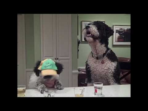 WTF Snooki Punch Reenacted by Dogs Video of the Day